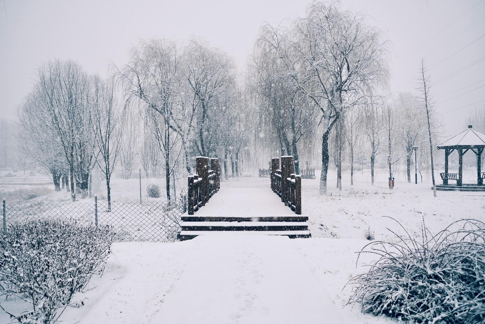 木亭、落雪、柳树